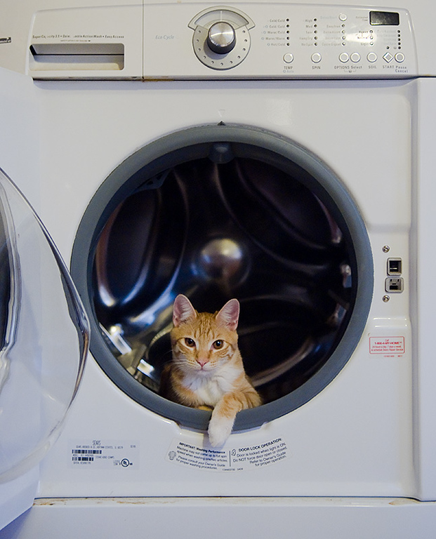 Leonard in the Washer I