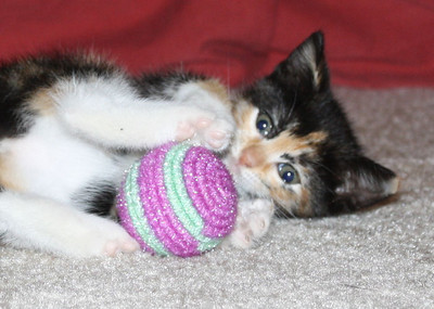 Zoey as a kitten playing