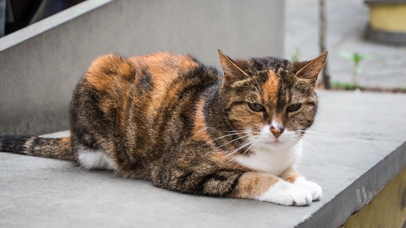 Stray Cat in Italy