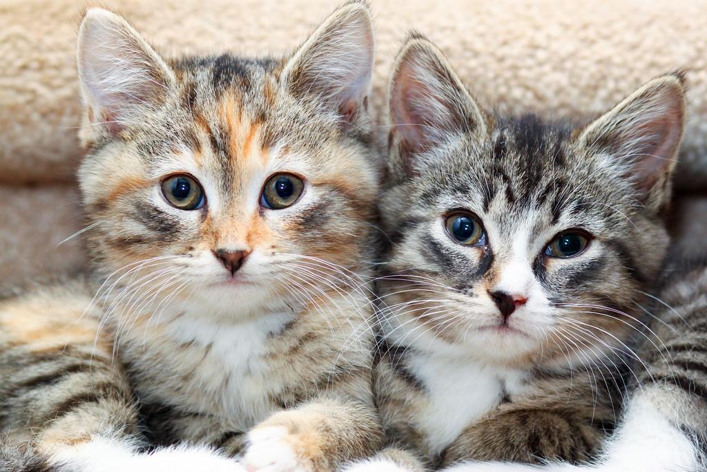 IMAGE: https://photos.smugmug.com/Animals/Cats/i-H6RBPZc/0/6f591d92/XL/IMG_8608-XL.jpg
