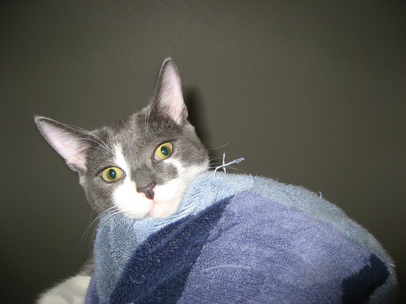 Self portrait: Towel wrapped around my head, with a crazy cat riding around on it.