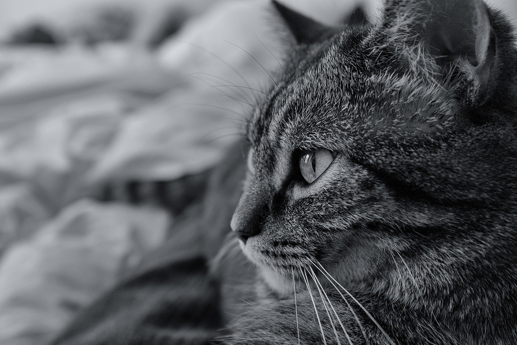IMAGE: https://photos.smugmug.com/Animals/Cats/i-LnrkSV3/0/a49467d6/XL/DSCF3245-Edit-XL.jpg