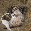 Comfy, Cozy, Cats