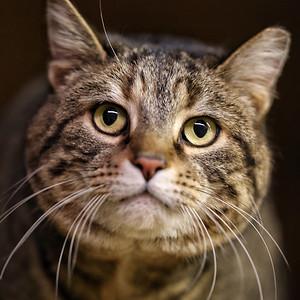 Matilda the Barn Cat