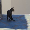 Cat in Shadow