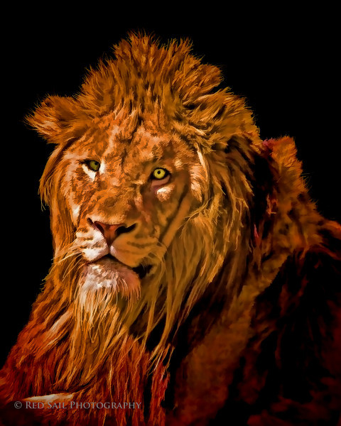 King of the Jungle...