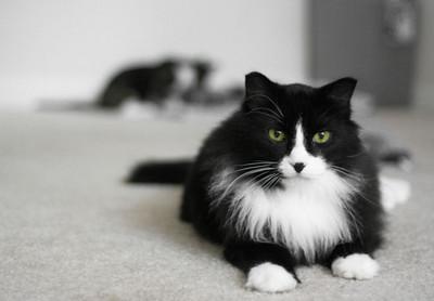 Sara's cat, Owen