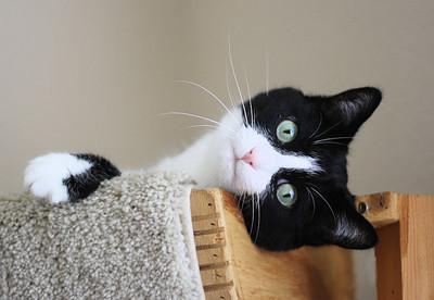 Pita, Sara's cat