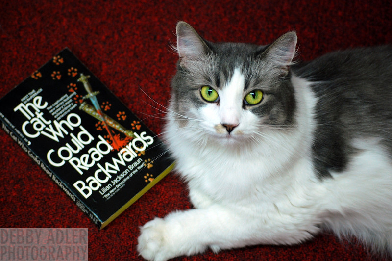 Gracey: Edisto Bookstore Cat