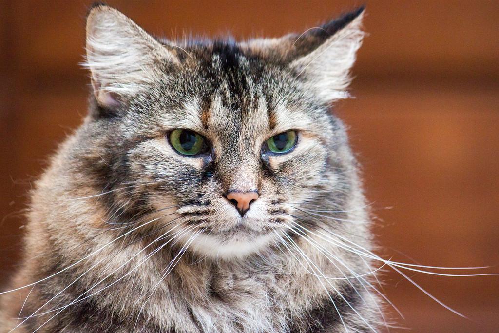 IMAGE: https://photos.smugmug.com/Animals/Cats/i-bn4FWHH/0/bec92f60/XL/IMG_1430-XL.jpg