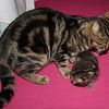 Melody and her kittens