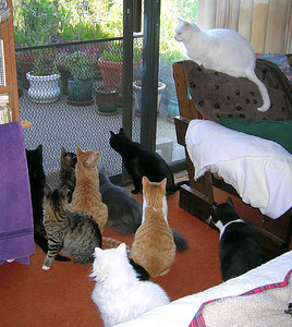 10 cats out of 24 - probably the most we'll ever see in one photo!