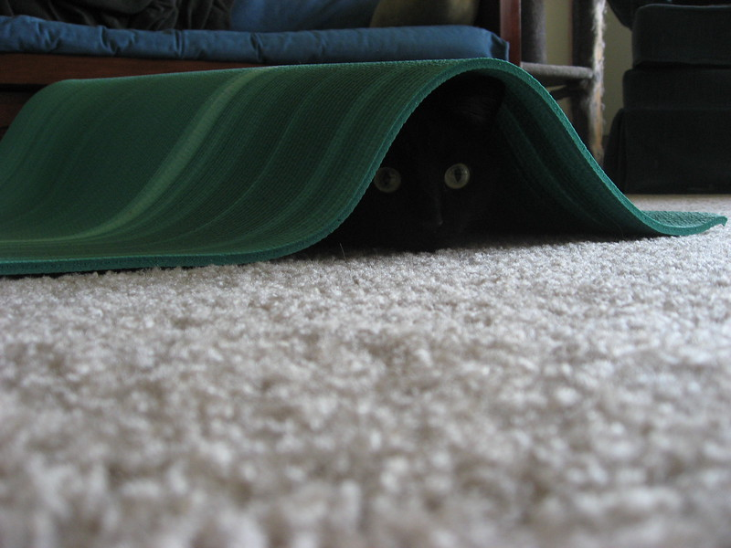 Fizz , hiding under a yoga mat.  Mad ninja skills.