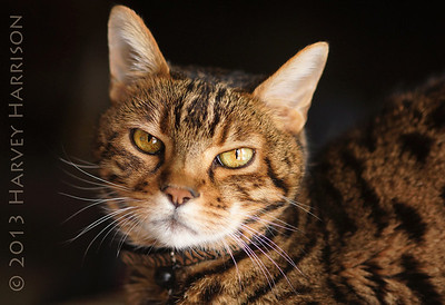 cat_2164_DSC03806_2013-12-14
