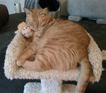 Domenico, all 20 pounds of him, snuggling his favorite toy...