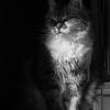 A pensive look...