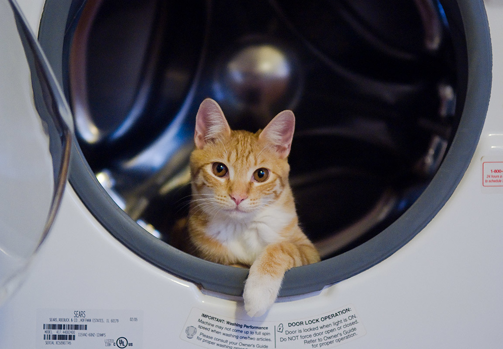 Leonard in the Washer II
