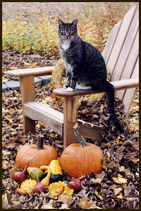 P-V-0066-18 Pumpkins and gourds and cats, Oh my!
