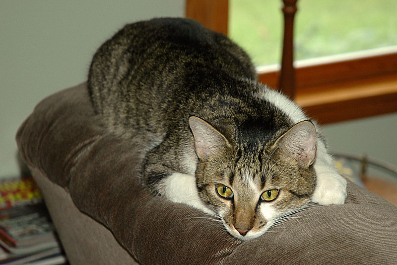 """Sweet Pea, one of our """"kittens"""" who arrived in June 2005."""