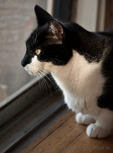 Pixel looking out the window at the birds, thinking his evil little thoughts.