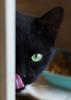 black cat tongue can 0114 4686