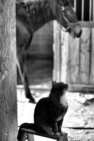 Barn cat and Taylor, Sara's horse In Foley, MN