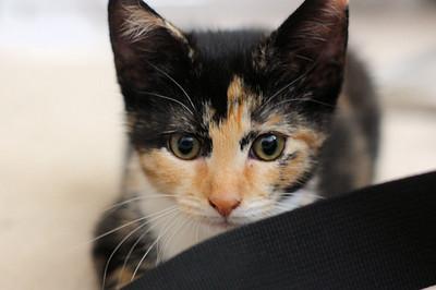 Sara's cat, Zoey
