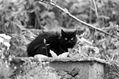 Cattys