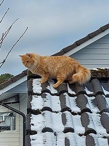 Ellie, A New Cat in da Hood
