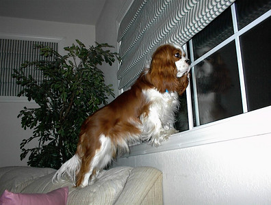 2000 - Crosby waiting for master to come home