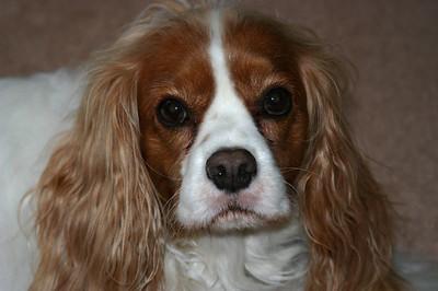 2009 - Buddy