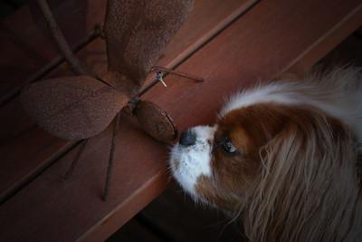 Ollie - funny Dragonfly smells strange.
