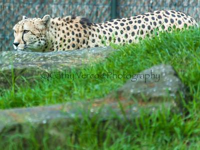 Auckland Zoo 2013