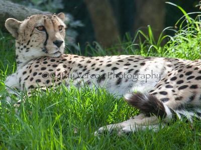 Auckland Zoo 2014