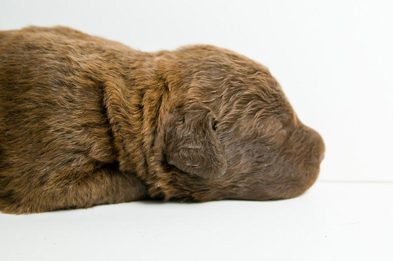 100420-ChesapeakePuppies-026