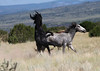 """The Fight Above""<br /> <br /> Two stallions tag each other in a fight.<br /> Placitas Wild Horses<br /> <br /> Cheyenne Rondeaux  age 8"