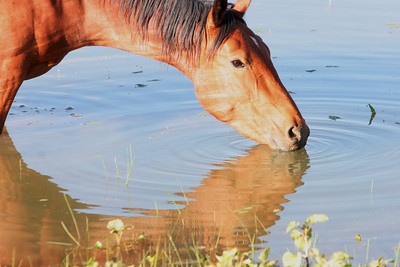 Pretty girl stops for a drink  Cheyenne Rondeaux age 8