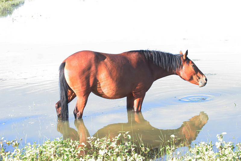 Reflection in the pond  Wild horses Cheyenne Rondeaux