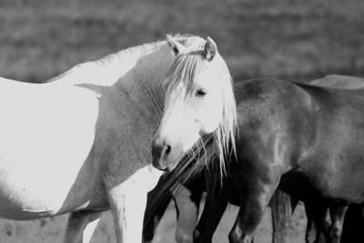 White knight  Cheyenne Rondeaux
