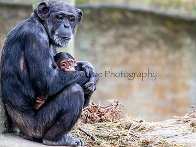 Wellington Zoo 2013