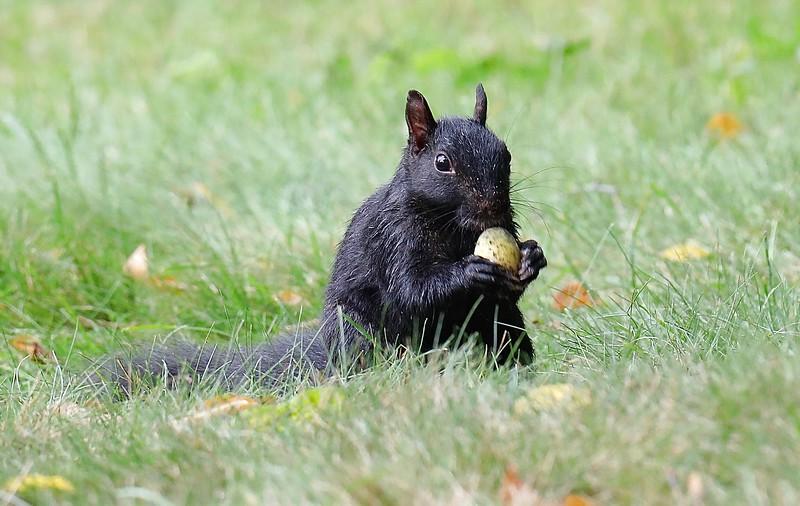 Squirrel Sampling