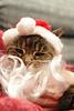 Santa Claws 2A - Chloë