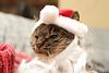 Santa Claws 3 - Peanut