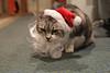 Santa Claws 1A - Sparky