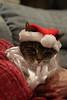 Santa Claws 2 - Chloë