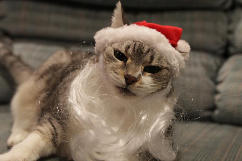 Santa Claws 1 - Sparky