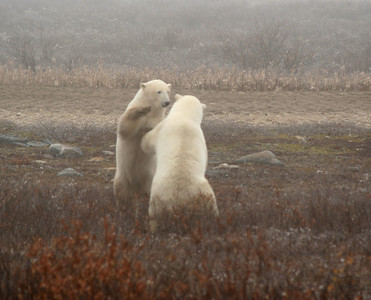 Our guide thought that these two were a mother and adult daughter reuniting in a playful way.  Photo by Karen