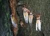 cicadas2789