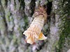 cicada6154
