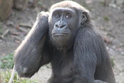 Cincinnati Zoo - 18 Feb. '18